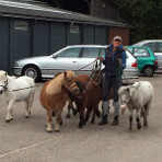 manegeberestein_pony